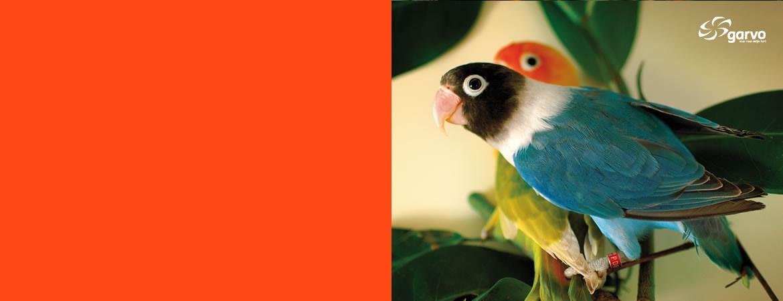 kooi- en volièrevogels
