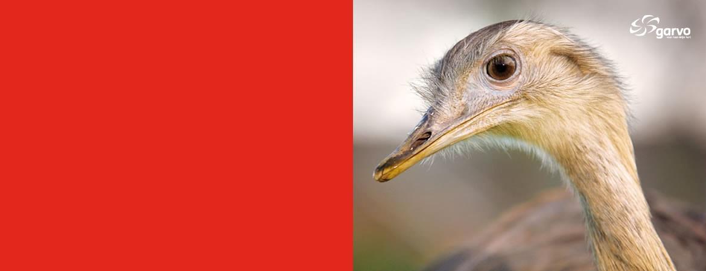 loopvogels