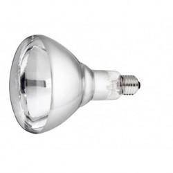 Lamp 250w wit Hard Glas Philips