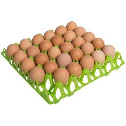 Eier tray for 30 kippeneieren afm. 302x304mm, max. eimaat 49mm