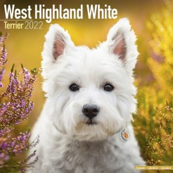 Kalender West Highland White Terrier 2022