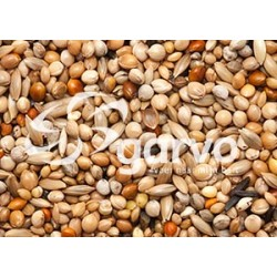 383825 Tropical gold 2,5kg