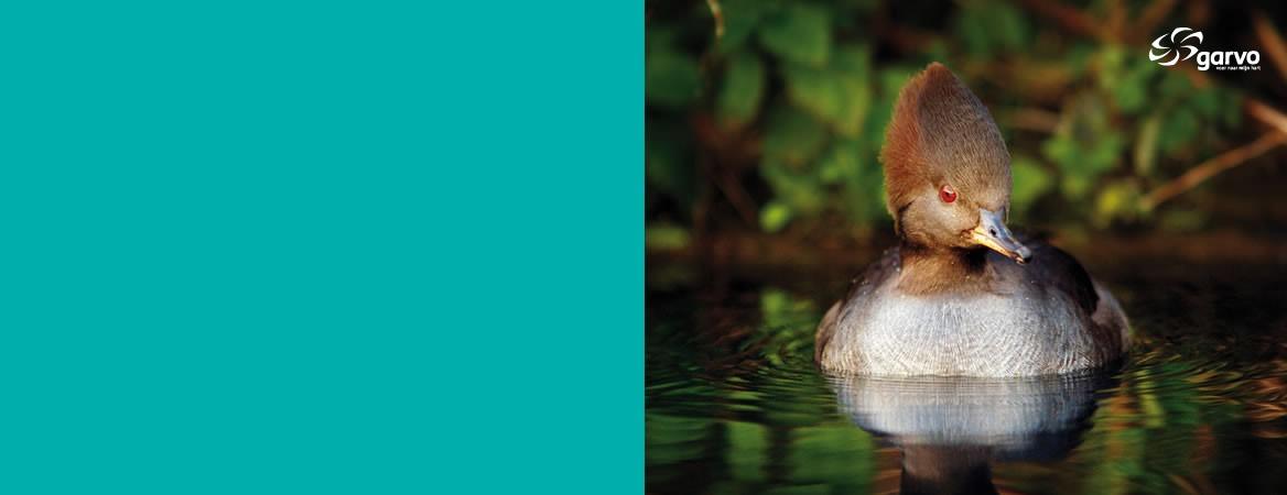 Watervogels
